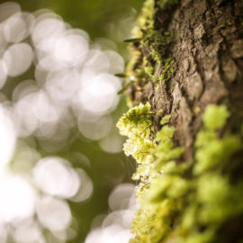 mossy tree trunk in the forest, selective focus